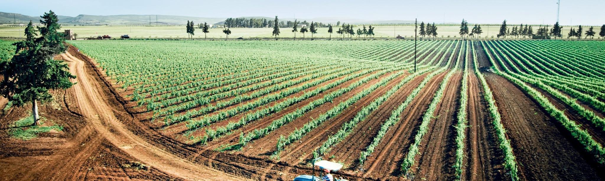 главное место в сельском хозяйстве занимает